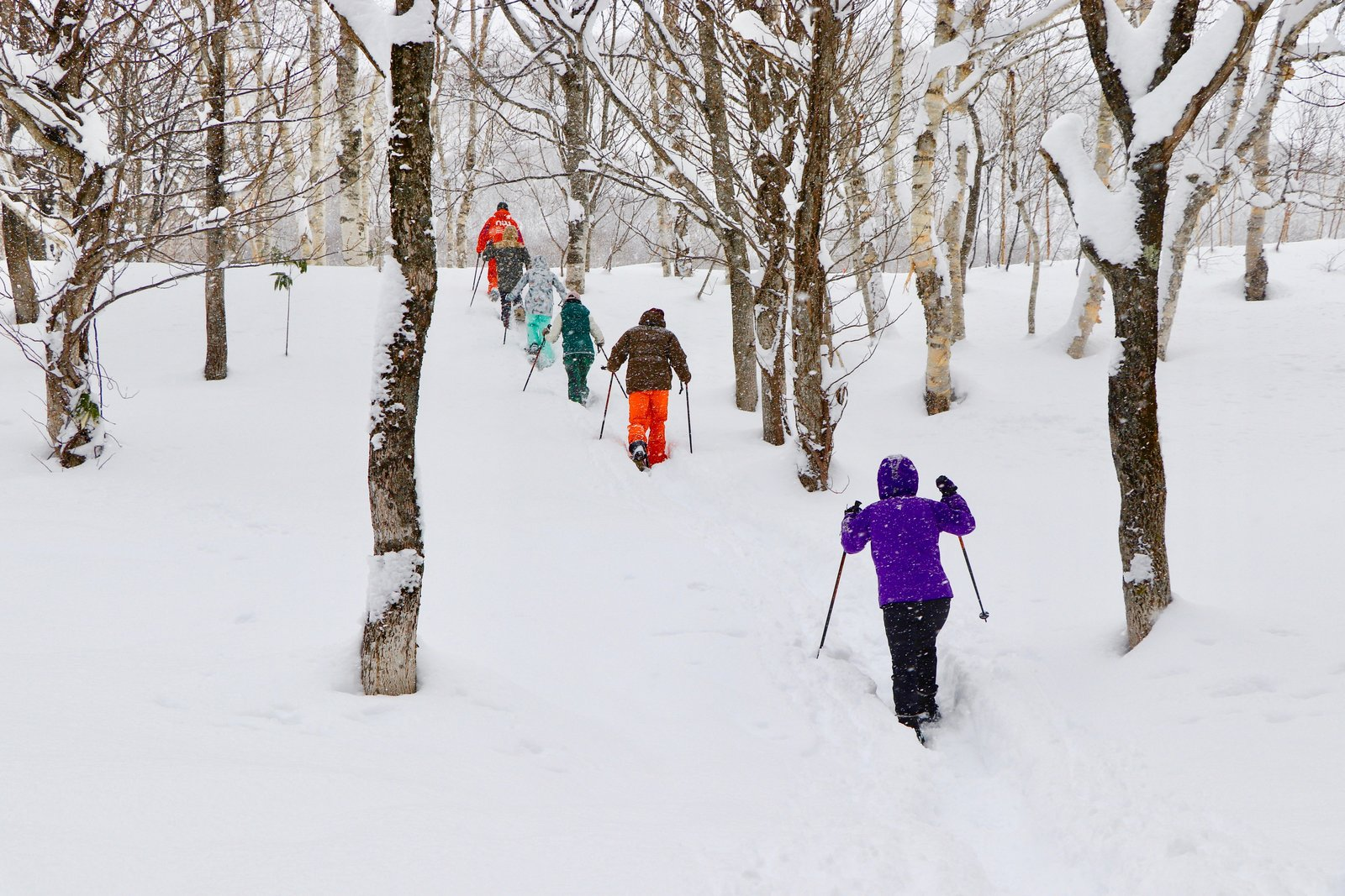 Snowshoe tour through Hanazono forrest in Niseko