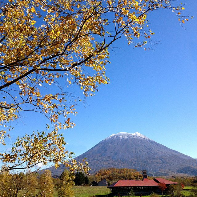 Autumn in niseko medium